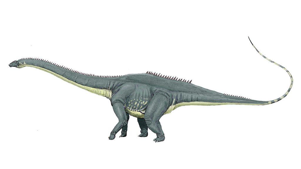dinosaurios_mas_grandes_amphicoelias